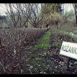 Szkolenie dla przewodników Ogrodu Botanicznego Uniwersytetu Warszawskiego